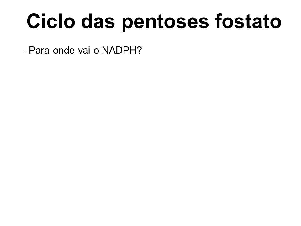 Ramo oxidativo da via das pentoses Ciclo das pentoses fostato - Para onde vai o NADPH?