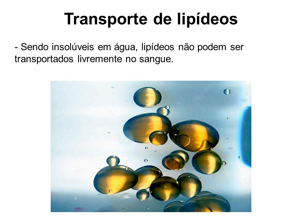 Transporte de lipídeos - Sendo insolúveis em água, lipídeos não podem ser transportados livremente no sangue.