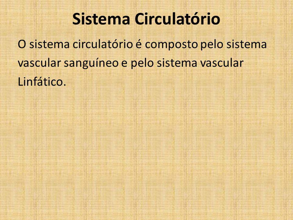 Sistema Vascular Sanguíneo 1 - Coração; 2 - Veias; 3 - Artérias; 4 - Capilares.