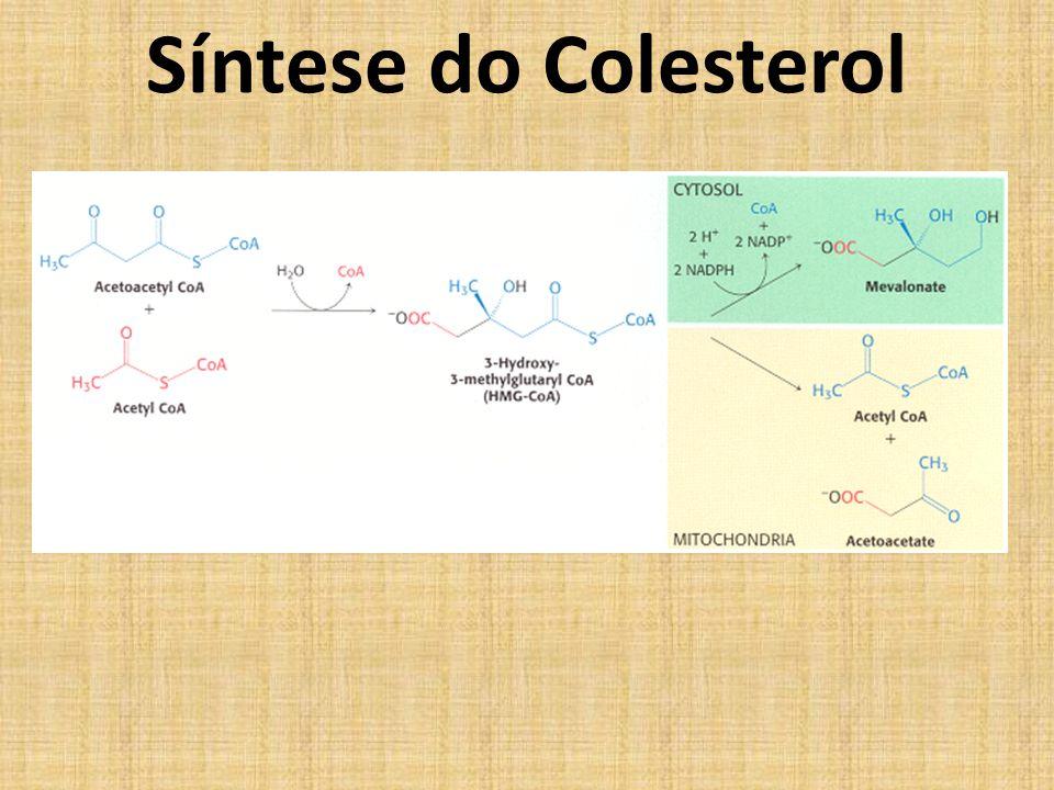 Síntese do Colesterol