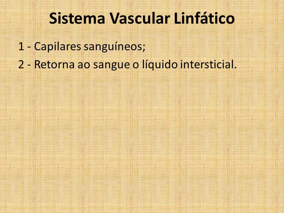 Sistema Vascular Linfático 1 - Capilares sanguíneos; 2 - Retorna ao sangue o líquido intersticial.