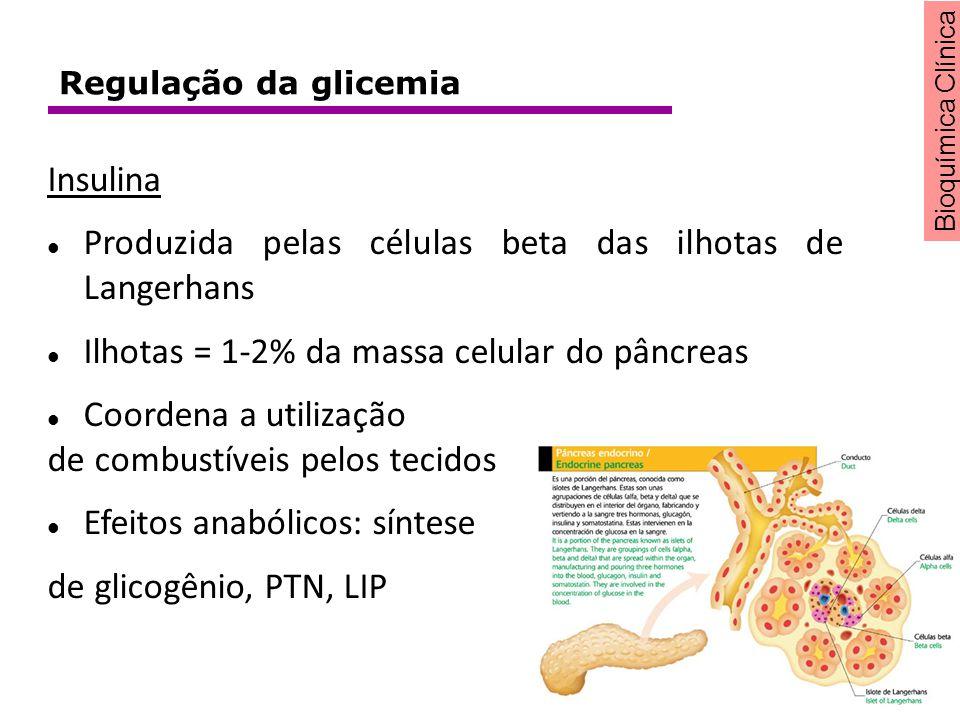 Bioquímica Clínica Insulina Produzida pelas células beta das ilhotas de Langerhans Ilhotas = 1-2% da massa celular do pâncreas Coordena a utilização d