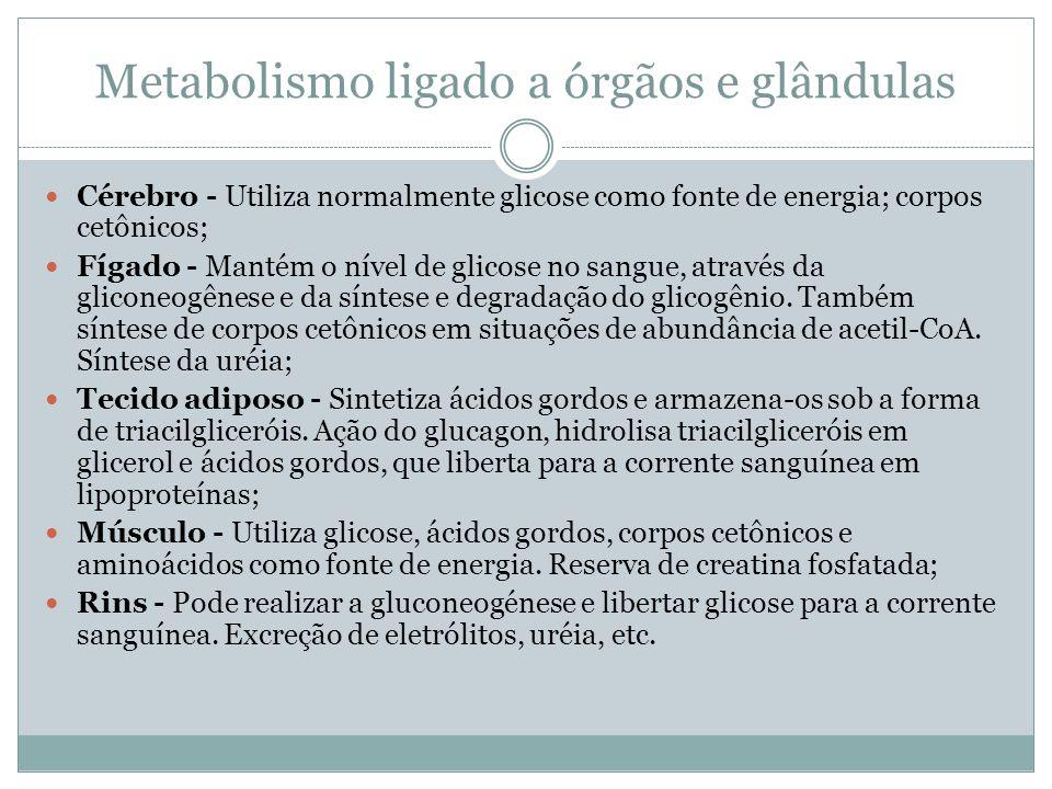 Metabolismo ligado a órgãos e glândulas Cérebro - Utiliza normalmente glicose como fonte de energia; corpos cetônicos; Fígado - Mantém o nível de glicose no sangue, através da gliconeogênese e da síntese e degradação do glicogênio.