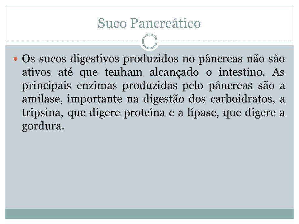 Suco Pancreático Os sucos digestivos produzidos no pâncreas não são ativos até que tenham alcançado o intestino. As principais enzimas produzidas pelo