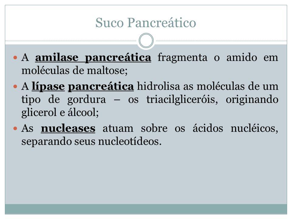 Suco Pancreático A amilase pancreática fragmenta o amido em moléculas de maltose; A lípase pancreática hidrolisa as moléculas de um tipo de gordura – os triacilgliceróis, originando glicerol e álcool; As nucleases atuam sobre os ácidos nucléicos, separando seus nucleotídeos.