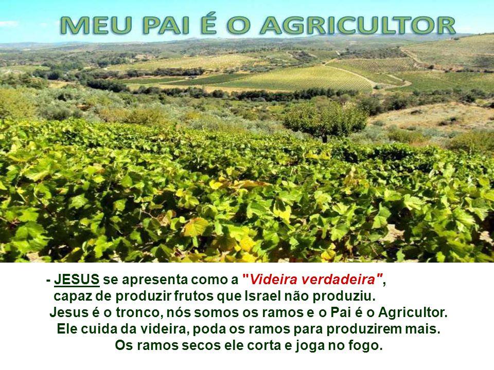 - JESUS se apresenta como a Videira verdadeira , capaz de produzir frutos que Israel não produziu.