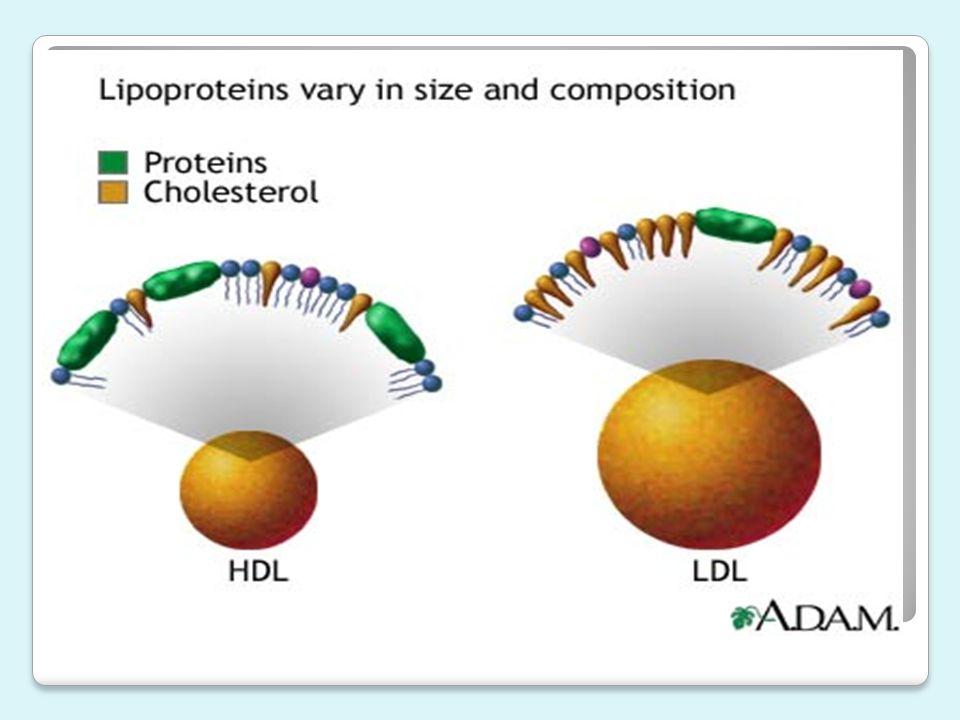 Lipoproteína de Alta Densidade (HDL) Definição e Estrutura Esse núcleo é circundado por uma camada monofásica de fosfolipídio, colesterol não- esterificado e apolipoproteínas.