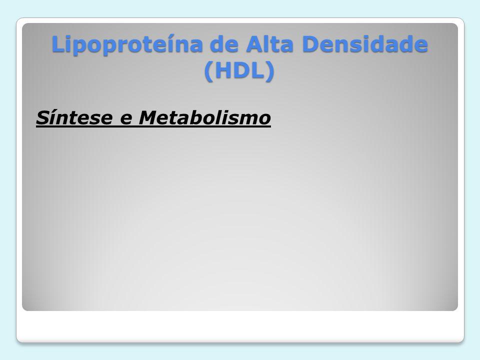 Lipoproteína de Alta Densidade (HDL) Catabolismo Mecanismo de remoção da circulação das proteínas presente HDL.