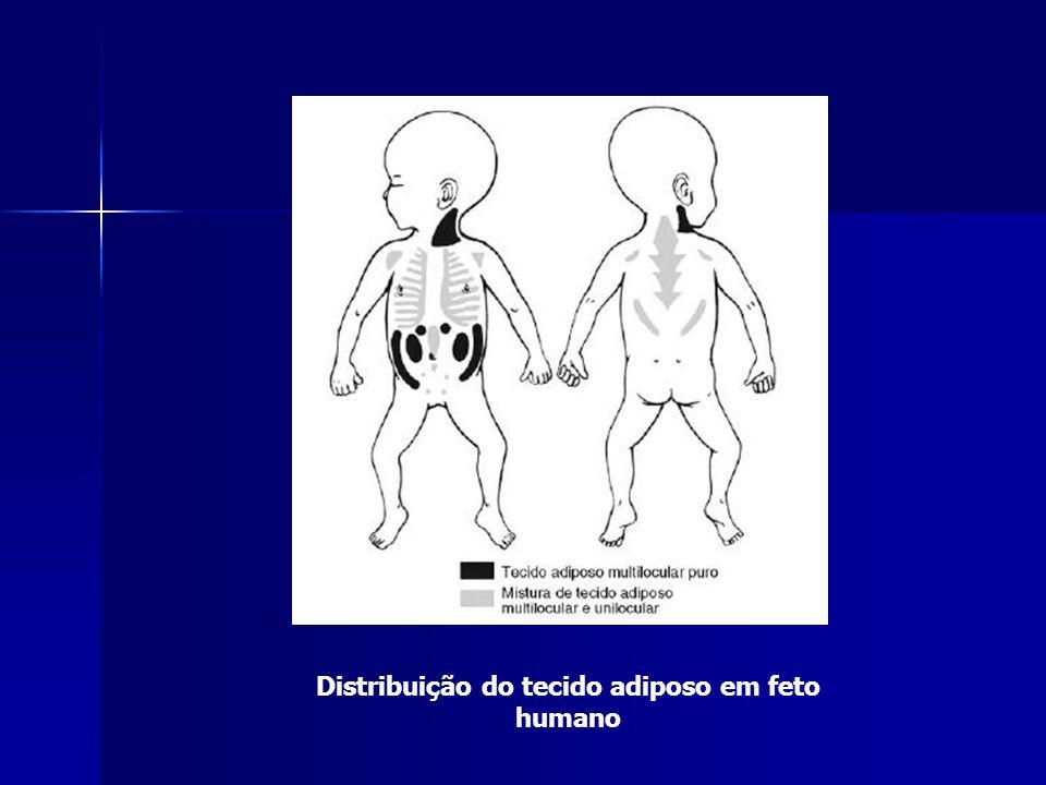 Distribuição do tecido adiposo em feto humano