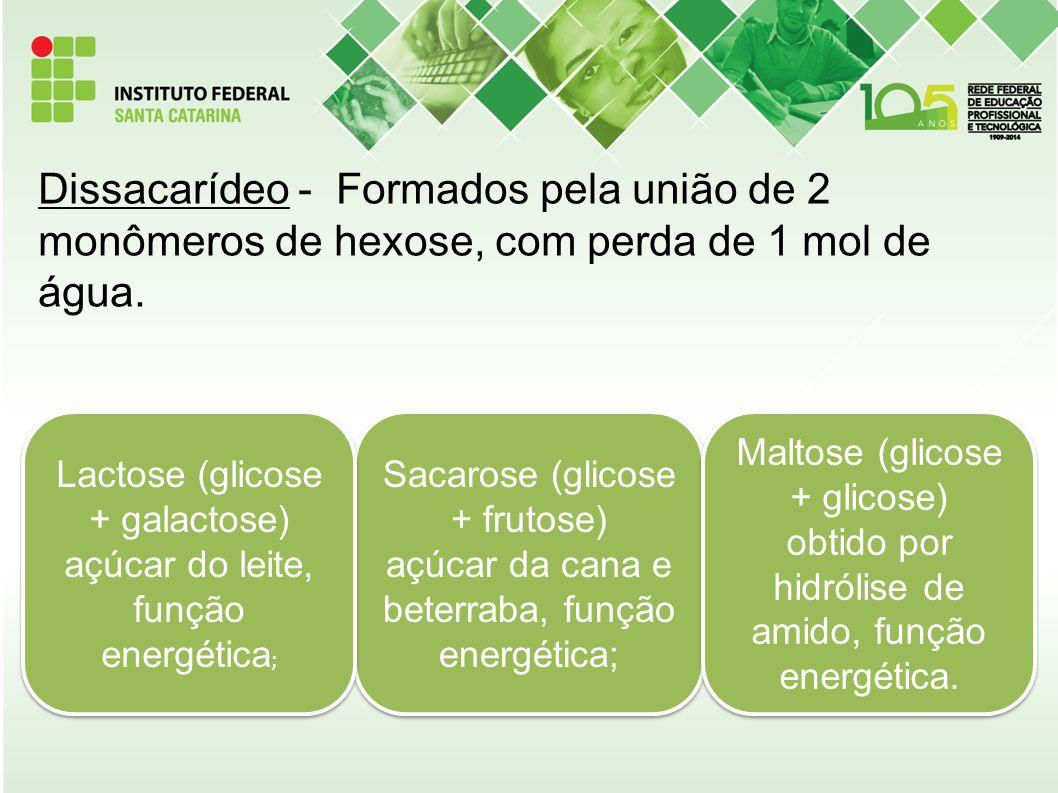 Dissacarídeo - Formados pela união de 2 monômeros de hexose, com perda de 1 mol de água. Sacarose (glicose + frutose) açúcar da cana e beterraba, funç