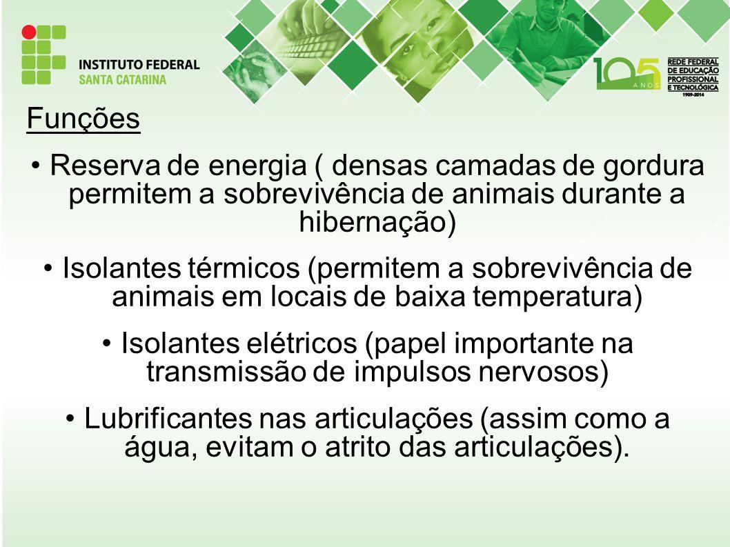 Funções Reserva de energia ( densas camadas de gordura permitem a sobrevivência de animais durante a hibernação) Isolantes térmicos (permitem a sobrev