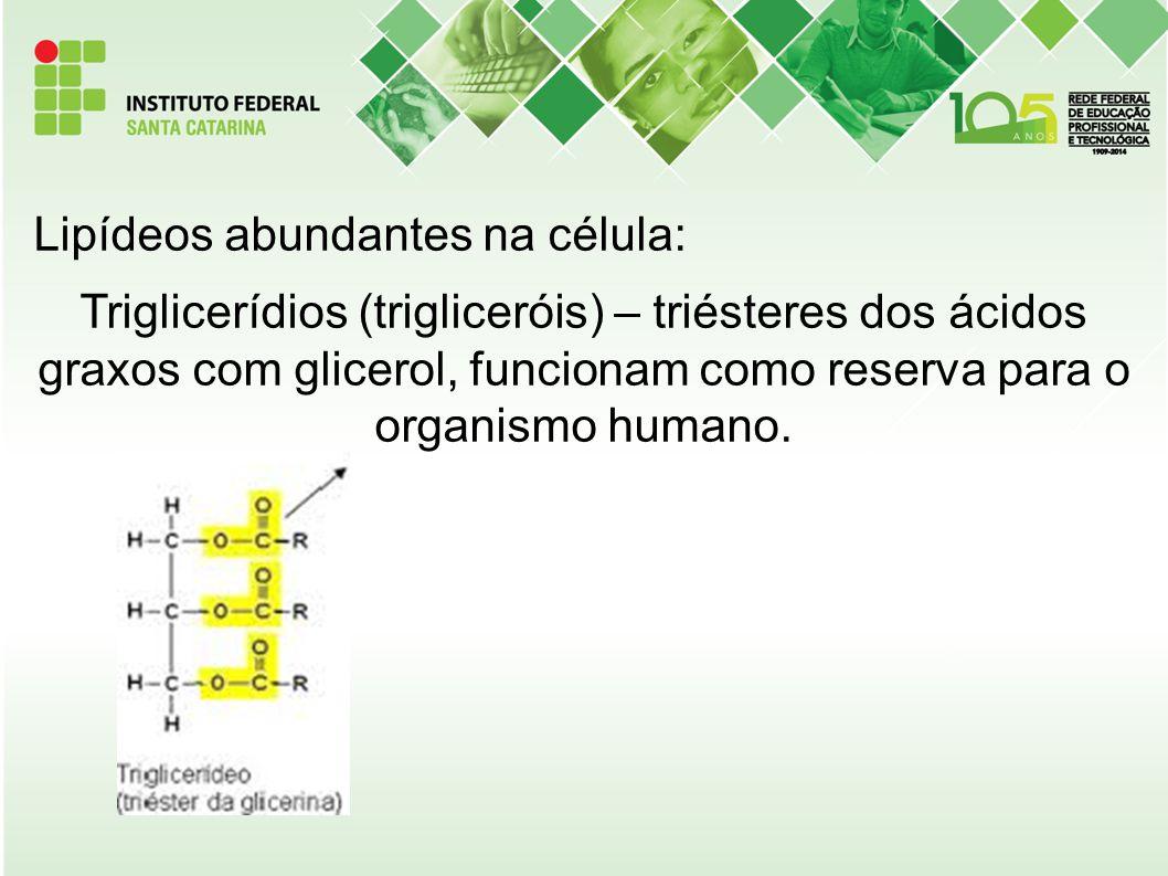 Lipídeos abundantes na célula: Triglicerídios (trigliceróis) – triésteres dos ácidos graxos com glicerol, funcionam como reserva para o organismo huma