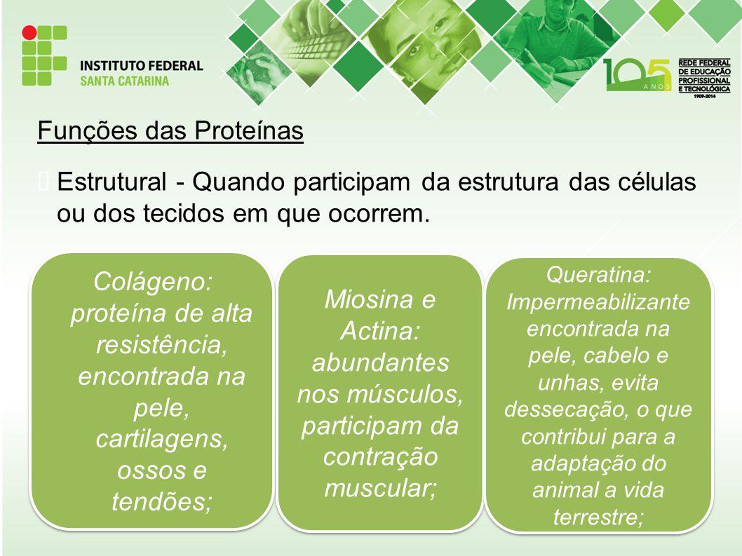 Funções das Proteínas  Estrutural - Quando participam da estrutura das células ou dos tecidos em que ocorrem. Colágeno: proteína de alta resistência,