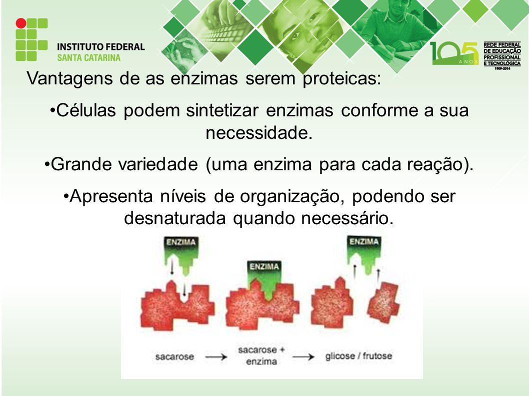 Vantagens de as enzimas serem proteicas: Células podem sintetizar enzimas conforme a sua necessidade. Grande variedade (uma enzima para cada reação).