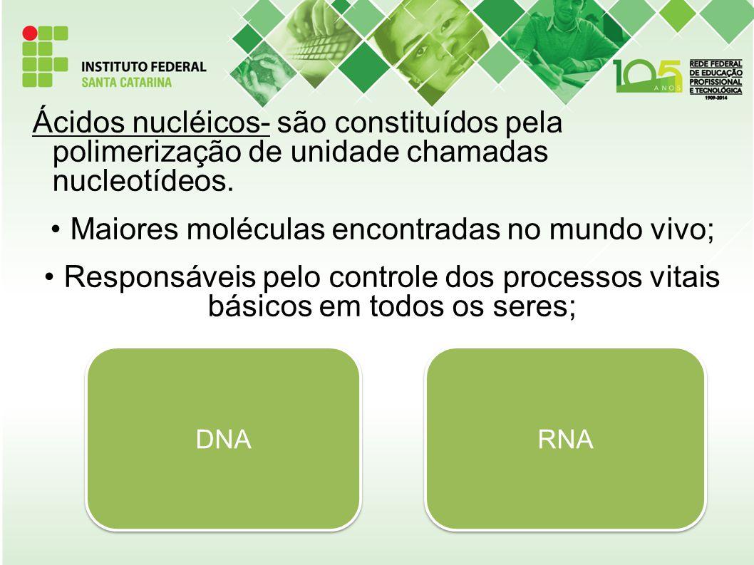 Ácidos nucléicos- são constituídos pela polimerização de unidade chamadas nucleotídeos. Maiores moléculas encontradas no mundo vivo; Responsáveis pelo