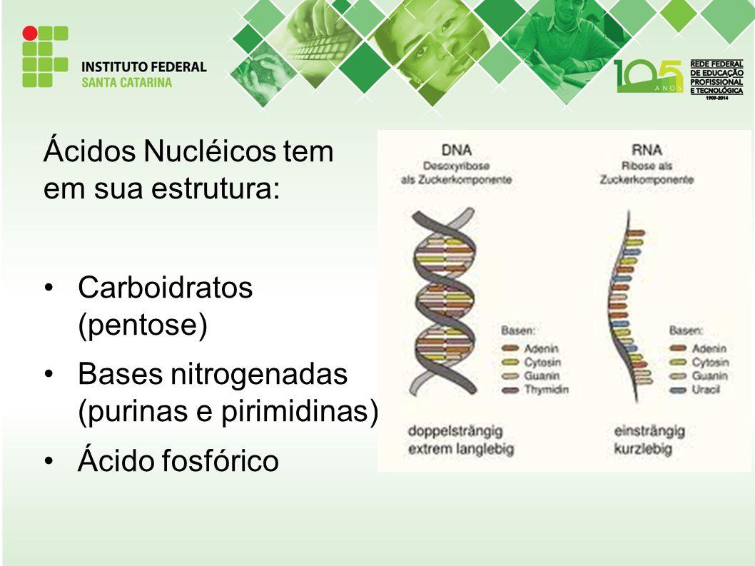 Ácidos Nucléicos tem em sua estrutura: Carboidratos (pentose) Bases nitrogenadas (purinas e pirimidinas) Ácido fosfórico