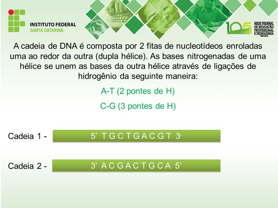 A cadeia de DNA é composta por 2 fitas de nucleotídeos enroladas uma ao redor da outra (dupla hélice). As bases nitrogenadas de uma hélice se unem as
