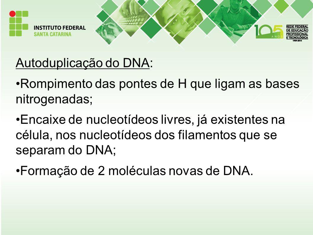 Autoduplicação do DNA: Rompimento das pontes de H que ligam as bases nitrogenadas; Encaixe de nucleotídeos livres, já existentes na célula, nos nucleo