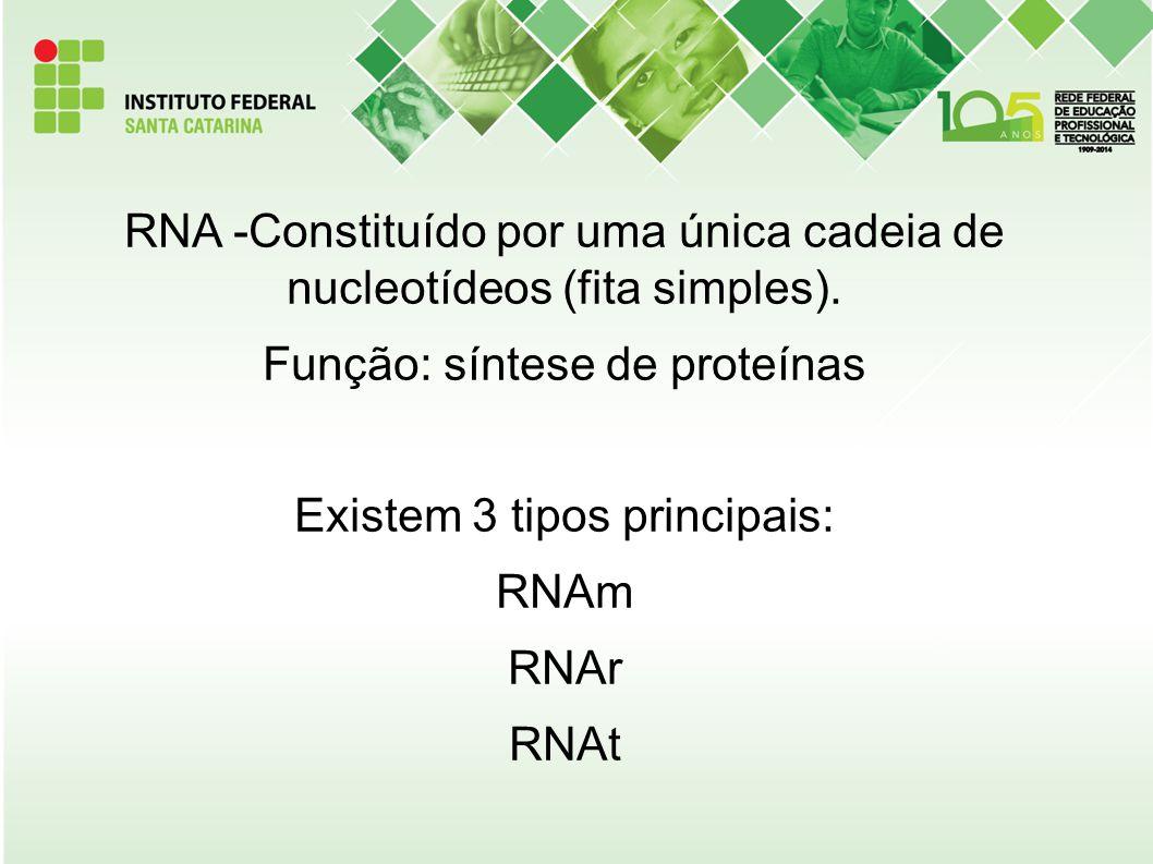 RNA -Constituído por uma única cadeia de nucleotídeos (fita simples). Função: síntese de proteínas Existem 3 tipos principais: RNAm RNAr RNAt