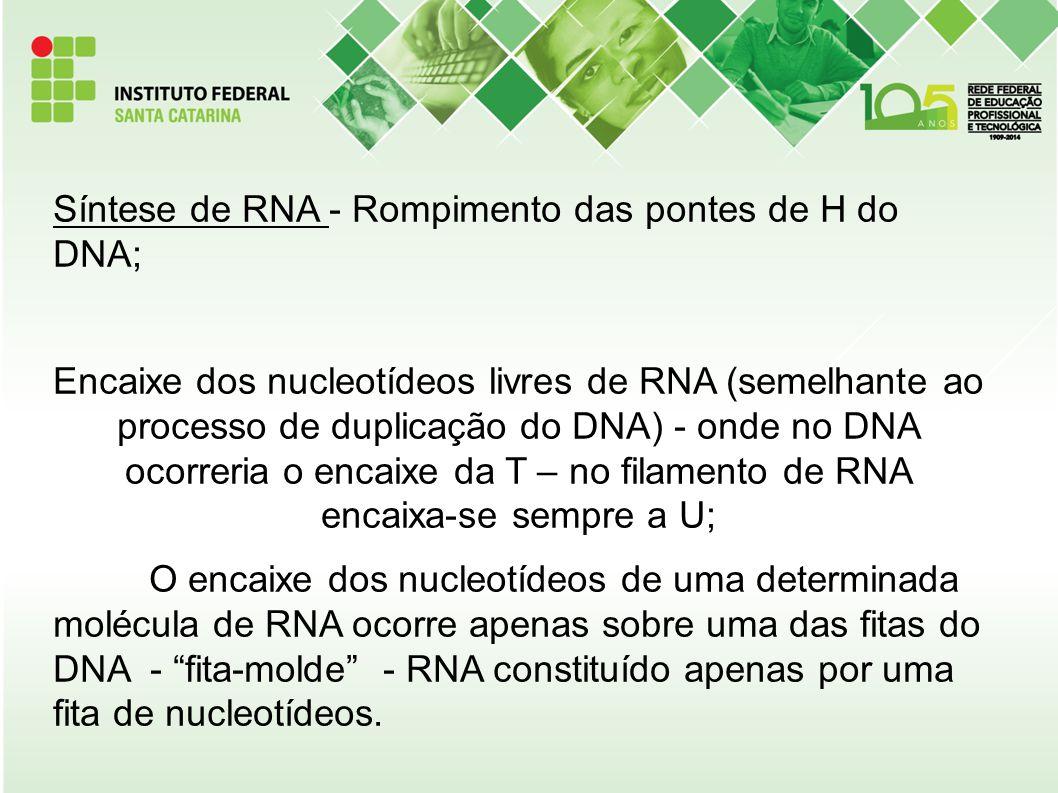 Síntese de RNA - Rompimento das pontes de H do DNA; Encaixe dos nucleotídeos livres de RNA (semelhante ao processo de duplicação do DNA) - onde no DNA
