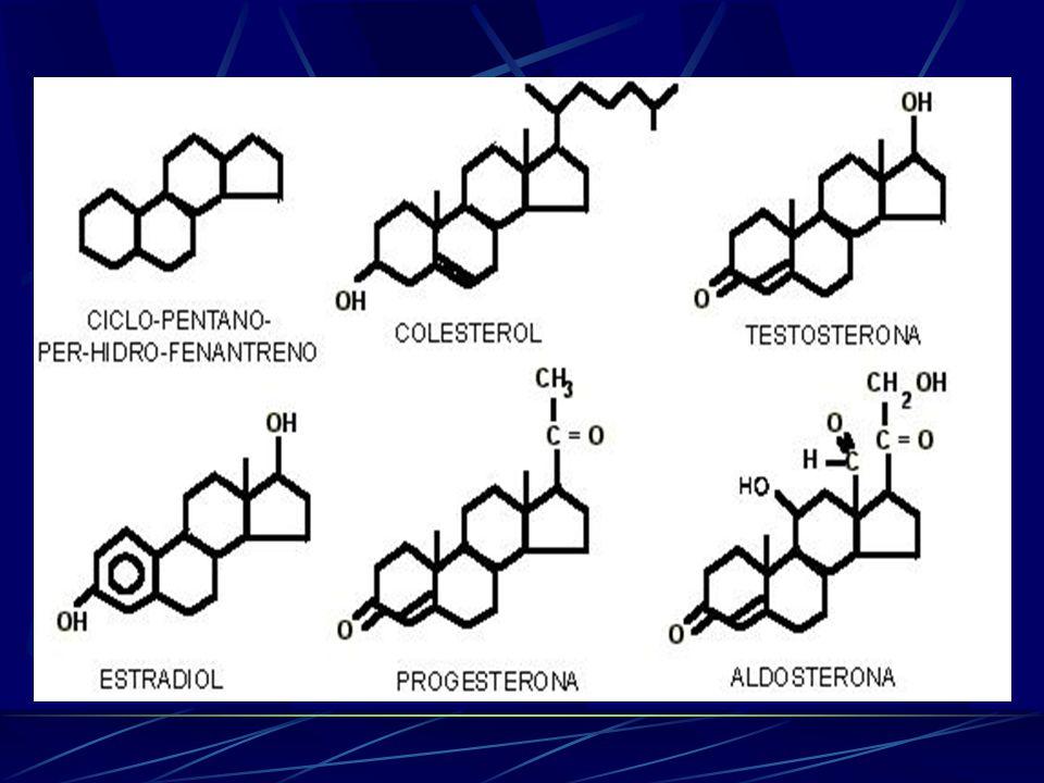 PRINCIPAIS ESTERÓIS * Hormônios sexuais – Testosterona, Progesterona e Estrogênios; Colesterol; Aldosterona; Coticosteróides (Cortisona e Cortisol) Er