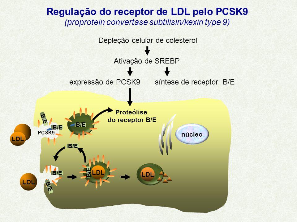 LDL B/E LDL B/E LDL núcleo B/E PCSK9 B/E Proteólise do receptor B/E Depleção celular de colesterol Ativação de SREBP síntese de receptor B/Eexpressão de PCSK9 Regulação do receptor de LDL pelo PCSK9 (proprotein convertase subtilisin/kexin type 9)