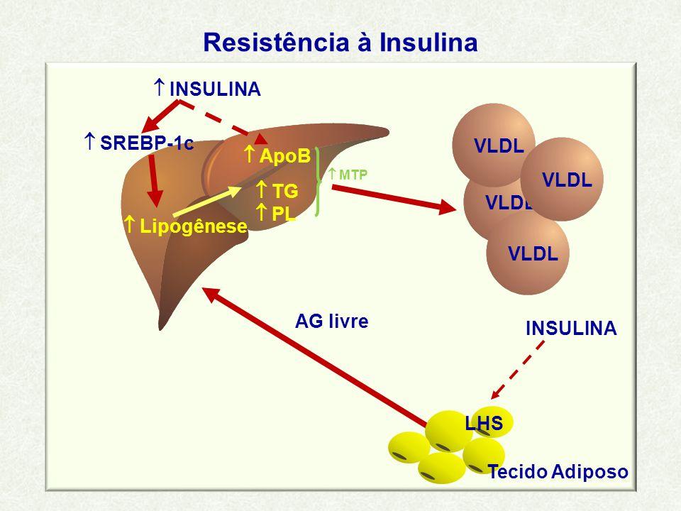 Resistência à Insulina VLDL  TG  PL  ApoB  Lipogênese  INSULINA  SREBP-1c AG livre INSULINA  MTP VLDL Tecido Adiposo LHS