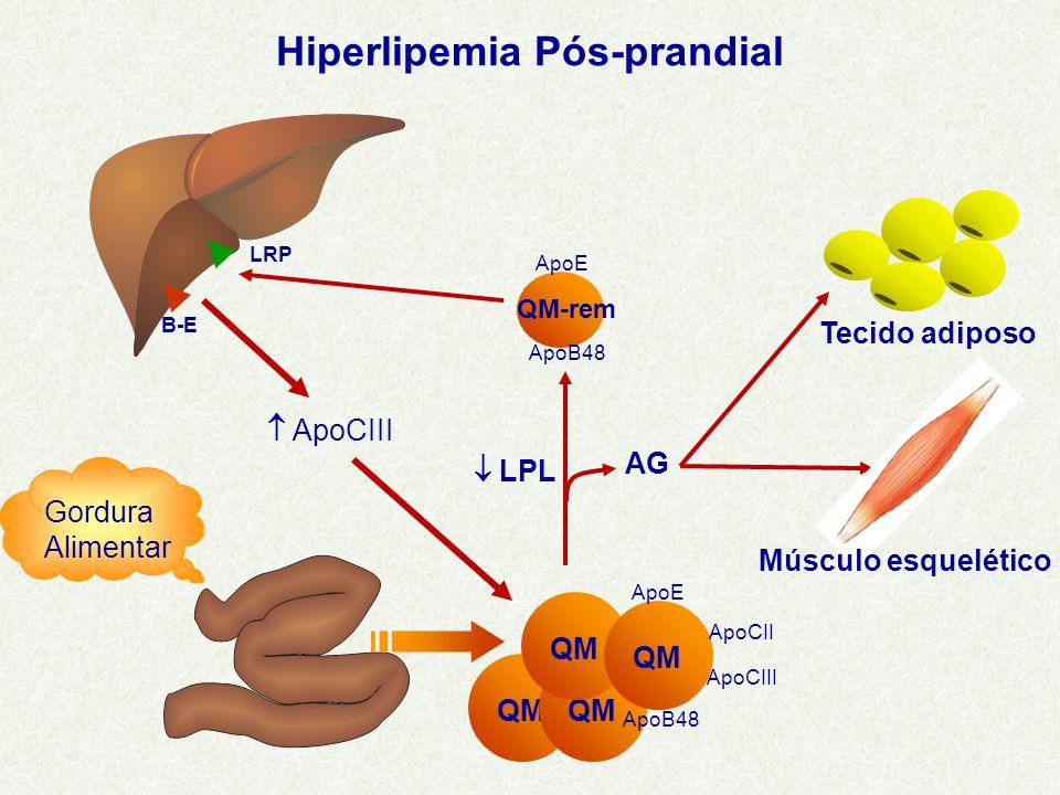 Hiperlipemia Pós-prandial Gordura Alimentar  LPL AG QM-rem ApoE ApoB48 B-E LRP QM ApoB48 ApoCIII ApoE ApoCII  ApoCIII Músculo esquelético Tecido adiposo