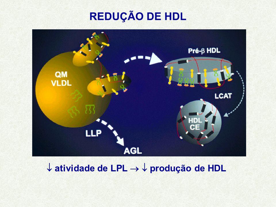 REDUÇÃO DE HDL  atividade de LPL   produção de HDL
