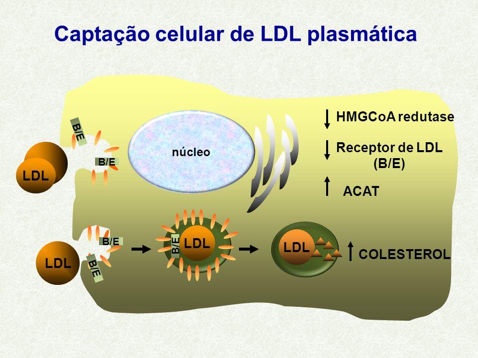 LDL COLESTEROL B/E HMGCoA redutase Receptor de LDL (B/E) ACAT LDL B/E LDL núcleo Captação celular de LDL plasmática