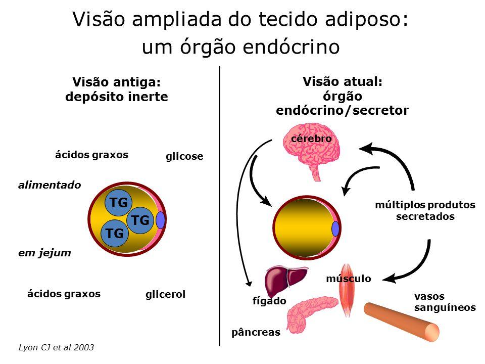 múltiplos produtos secretados fígado pâncreas músculo vasos sanguíneos Visão atual: órgão endócrino/secretor Visão antiga: depósito inerte ácidos grax