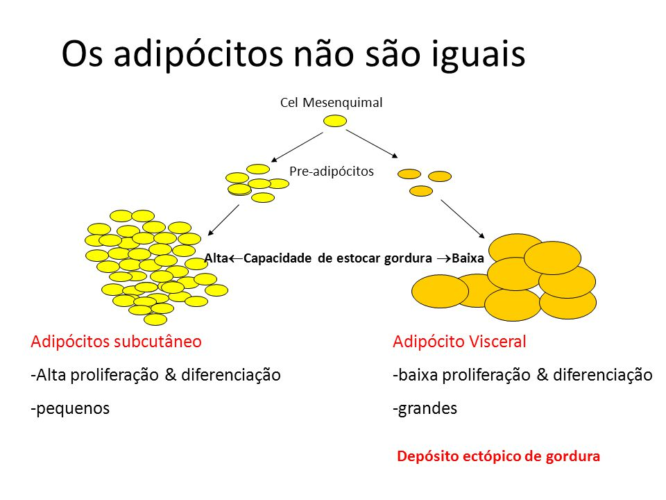 Os adipócitos não são iguais Adipócitos subcutâneo -Alta proliferação & diferenciação -pequenos Adipócito Visceral -baixa proliferação & diferenciação