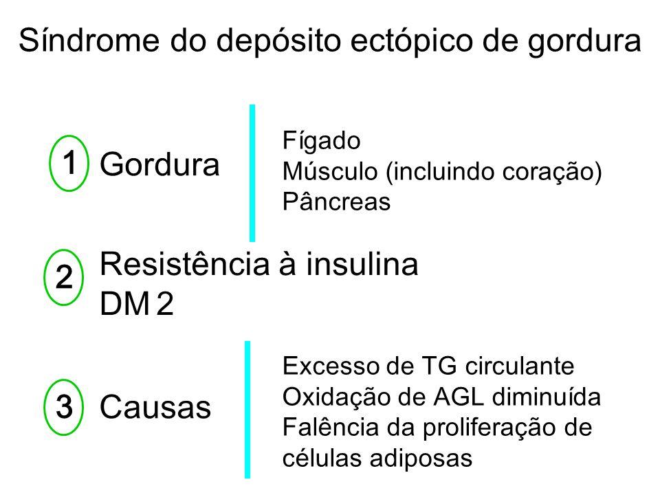 Gordura Fígado Músculo (incluindo coração) Pâncreas 12 Resistência à insulina DM 2 3 Causas Excesso de TG circulante Oxidação de AGL diminuída Falênci
