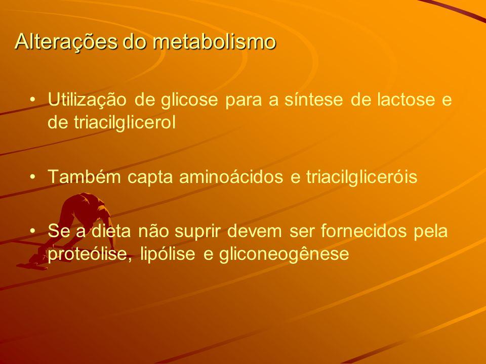 Alterações do metabolismo Utilização de glicose para a síntese de lactose e de triacilglicerol Também capta aminoácidos e triacilgliceróis Se a dieta não suprir devem ser fornecidos pela proteólise, lipólise e gliconeogênese