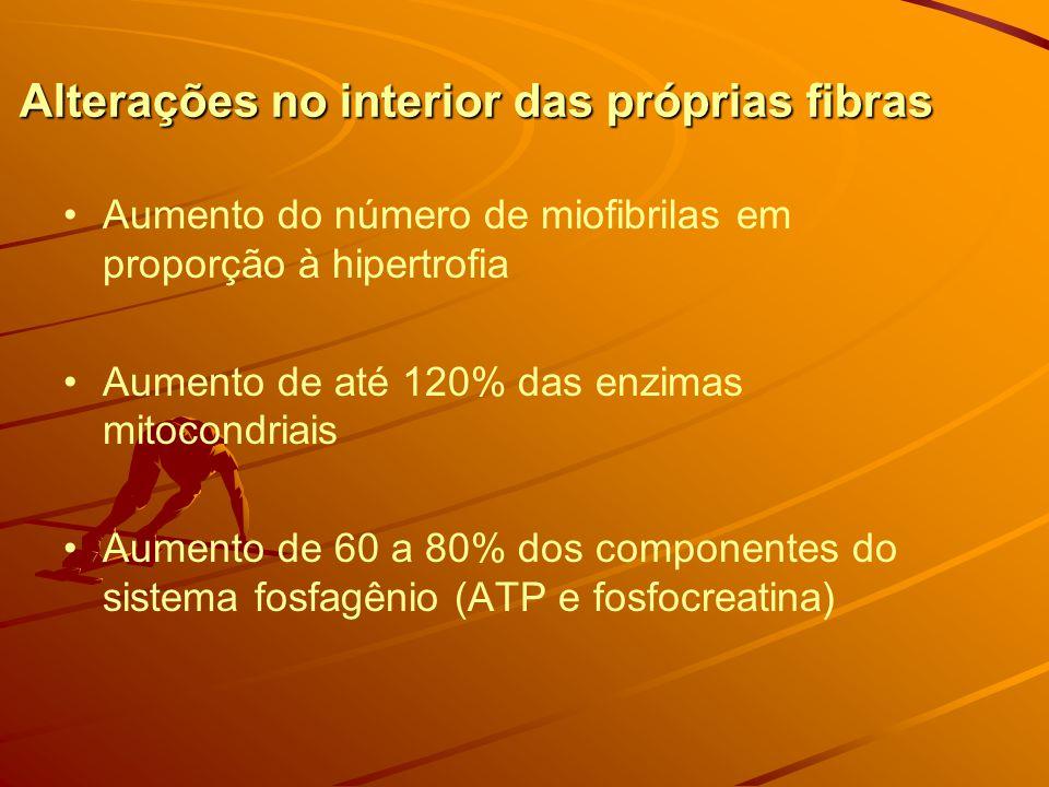 Alterações no interior das próprias fibras Aumento do número de miofibrilas em proporção à hipertrofia Aumento de até 120% das enzimas mitocondriais Aumento de 60 a 80% dos componentes do sistema fosfagênio (ATP e fosfocreatina)