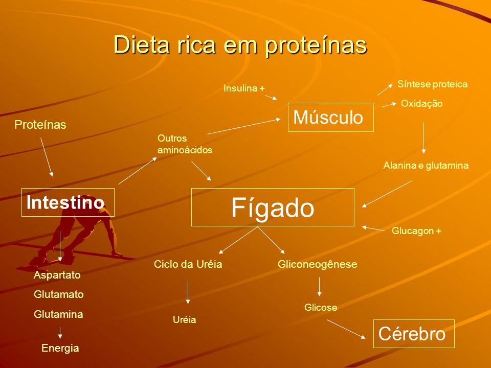 Dieta rica em proteínas Intestino Músculo Fígado Cérebro Proteínas Aspartato Glutamato Glutamina Energia Outros aminoácidos Síntese proteica Oxidação Alanina e glutamina Ciclo da UréiaGliconeogênese Uréia Glicose Insulina + Glucagon +