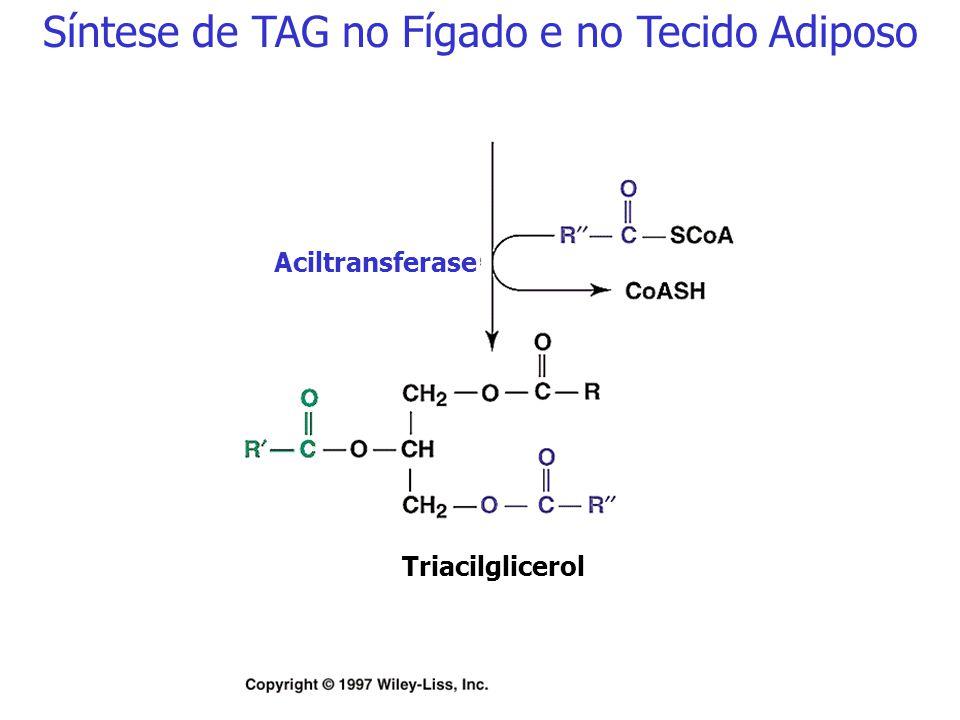 Ácido fosfatídico Fosfatidato fosfatase (citosol) Diacilglicerol Síntese de TAG no Fígado e no Tecido Adiposo