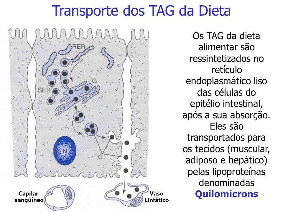 Aciltransferase Triacilglicerol Síntese de TAG no Fígado e no Tecido Adiposo