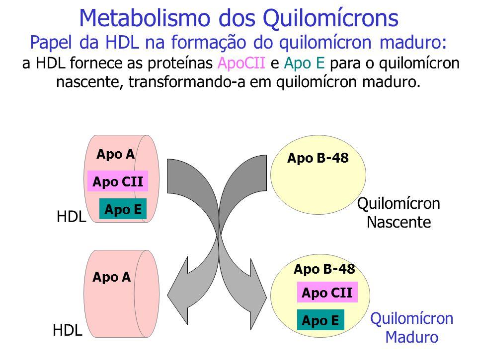 Metabolismo do Quilomícron e da VLDL O quilomícron e o VLDL irão ativar, através da apoproteína CII, a lipoproteína lipase (LPL) presente no endotélio