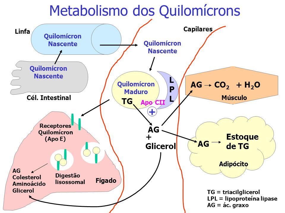 HDL Apo CII Apo E Apo A Apo B-48 Apo A Quilomícron Nascente Quilomícron Maduro Papel da HDL na formação do quilomícron maduro: a HDL fornece as proteí