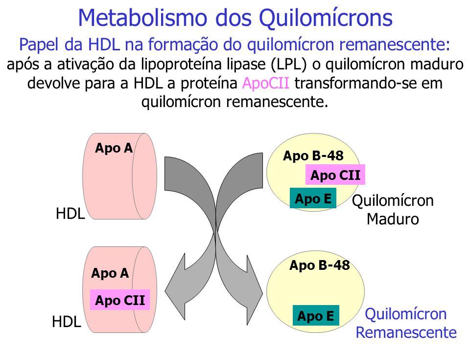 Linfa Cél. Intestinal Fígado Músculo Adipócito Quilomícron Nascente Quilomícron Nascente Quilomícron Nascente Quilomícron Maduro TG Apo CII LPLLPL AG