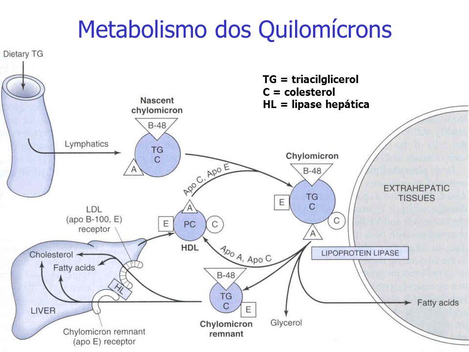 HDL Apo CII Apo E Apo A Apo B-48 Apo A Quilomícron Maduro Quilomícron Remanescente Papel da HDL na formação do quilomícron remanescente: após a ativaç