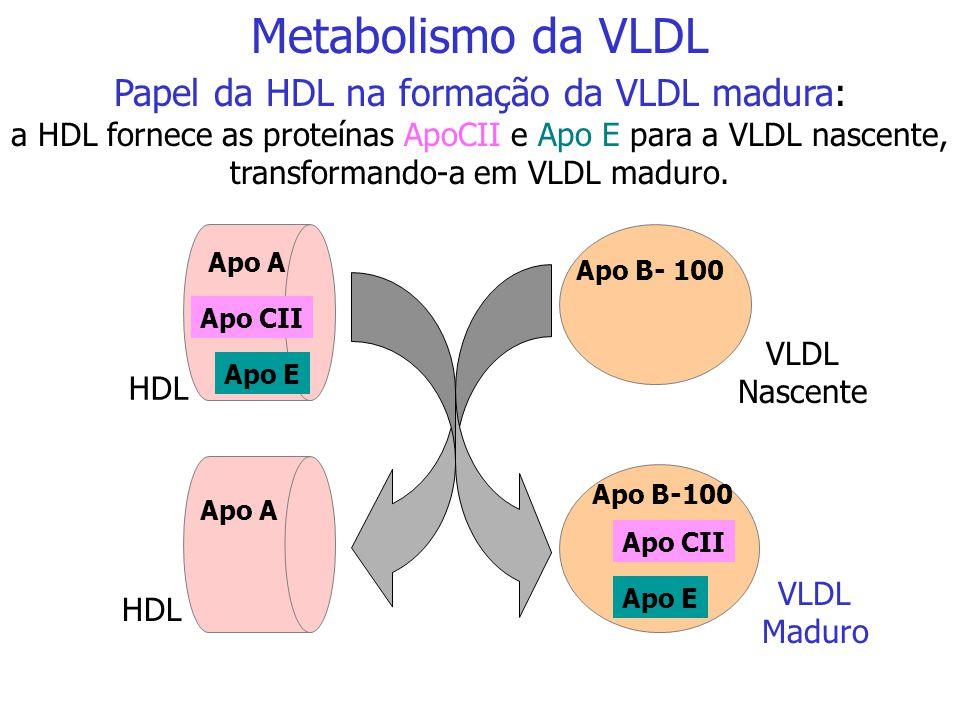 TG = triacilglicerol C = colesterol HL = lipase hepática Metabolismo dos Quilomícrons
