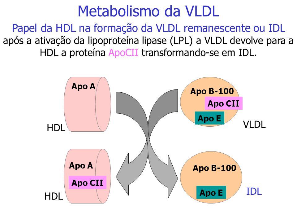 HDL Apo CII Apo E Apo A Apo B-100 Apo A VLDL Nascente VLDL Maduro Papel da HDL na formação da VLDL madura: a HDL fornece as proteínas ApoCII e Apo E p