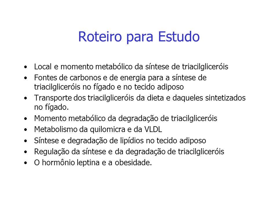 Metabolismo dos Triacilgliceróis Fonte: Cyntia Alencar Fin, PhD