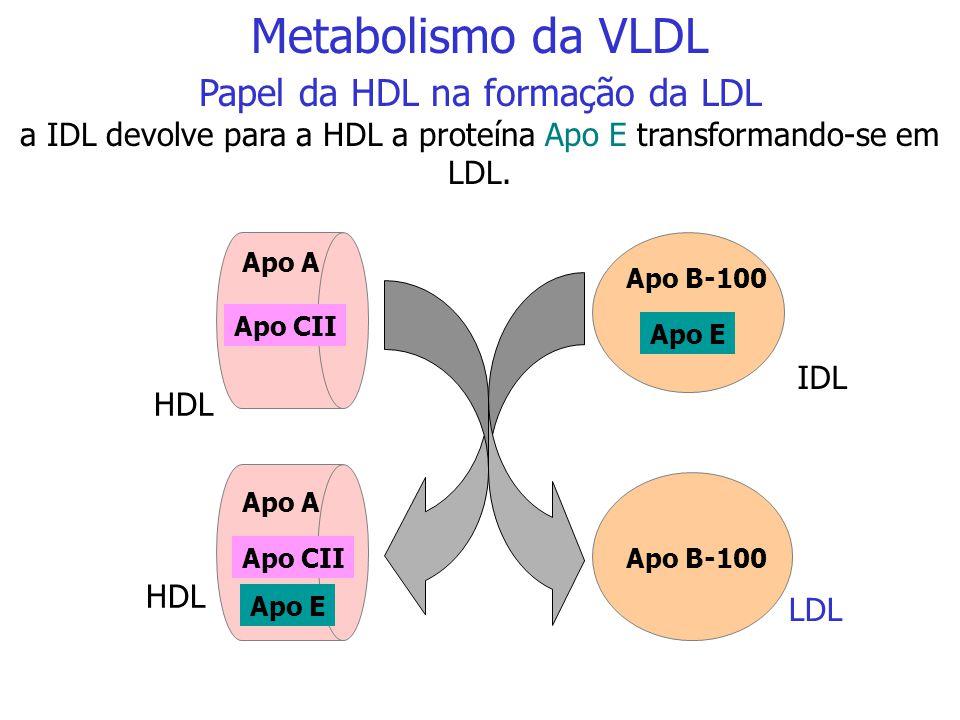HDL Apo CII Apo E Apo A Apo B-100 Apo A VLDL IDL Papel da HDL na formação da VLDL remanescente ou IDL após a ativação da lipoproteína lipase (LPL) a V