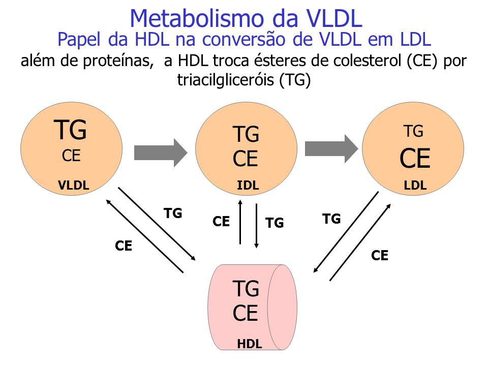 HDL Apo E Apo A Apo B-100 Apo A IDL LDL Papel da HDL na formação da LDL a IDL devolve para a HDL a proteína Apo E transformando-se em LDL. Metabolismo