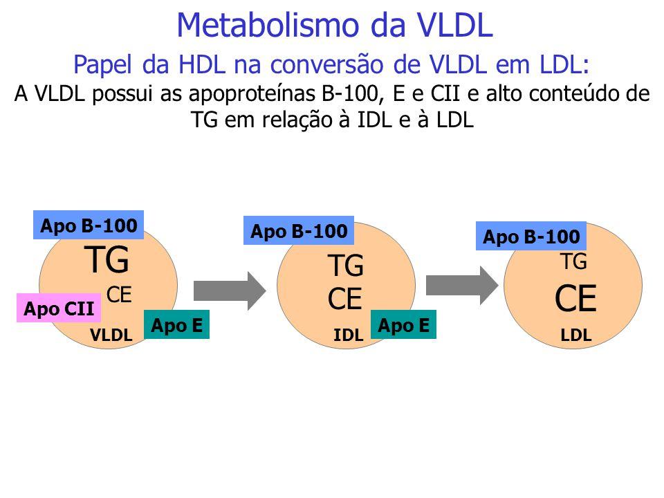 TG CE TG CE TG CE TG CE TG CE TG CE TG CE VLDLIDLLDL HDL Metabolismo da VLDL Papel da HDL na conversão de VLDL em LDL além de proteínas, a HDL troca é