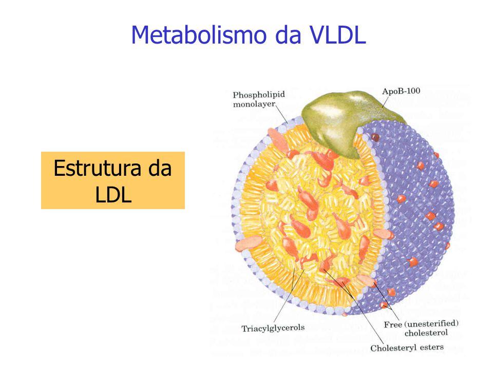 Metabolismo da VLDL Papel da HDL na conversão de VLDL em LDL: A VLDL possui as apoproteínas B-100, E e CII e alto conteúdo de TG em relação à IDL e à