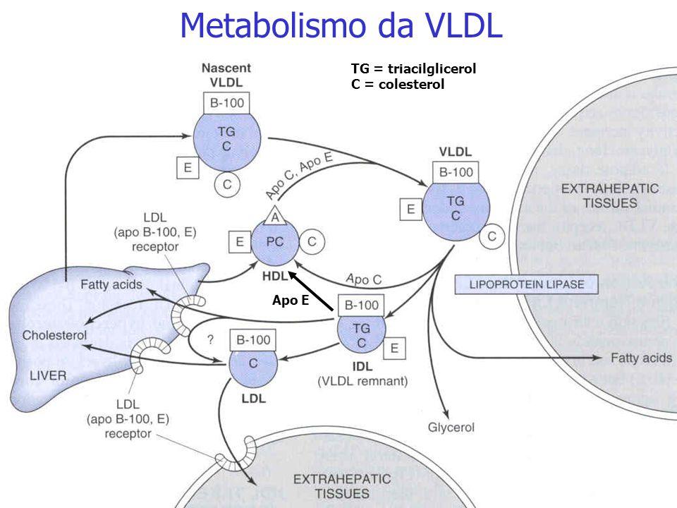 Estrutura da LDL Metabolismo da VLDL